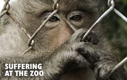 zoosuffering